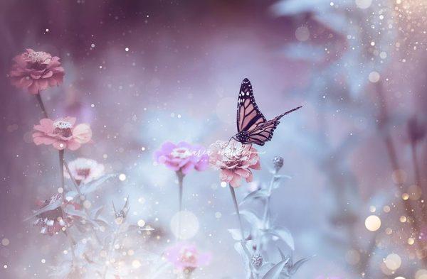 sparkle butterfly