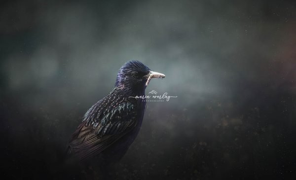 starling spacey copy for site